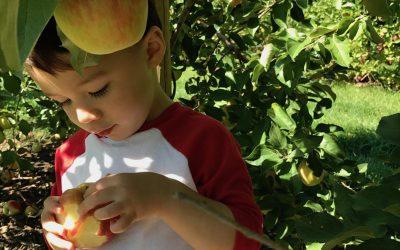 Apple Picking Around Toronto